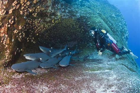 the top 5 scuba diving of costa rica