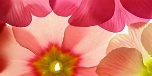Gemalte Bilder Auf Leinwand : blumenbilder auf leinwand haus dekoration ~ Frokenaadalensverden.com Haus und Dekorationen