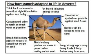Unique Animal Adaptations