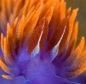 Top 9 Tips For Supermacro Photography Underwater