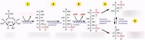 Memorize Glycolysis Mcat