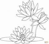 Coloring Pages Lily Water Lilies Drawing Supercoloring Printable Monet Flower Colouring Waterlily Line Nenuphar Frog Silhouettes Seerosen Paper sketch template