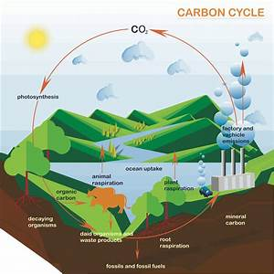 Processes And Pathways Of The Carbon Cycle