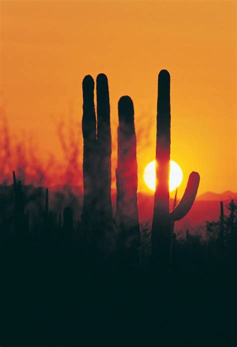 tucson visitors bureau warm weather getaway to tucson arizona midwest living