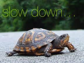 Turtle Slow Down