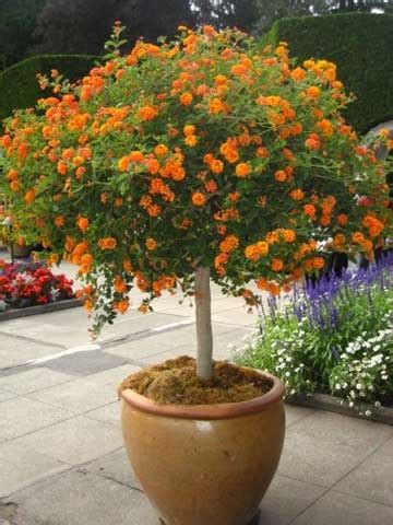 whole year flowering plants flowers that change color plant watching