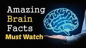 30 Amazing Brain Facts