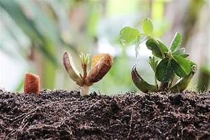 Peanut Germination and Other Planting Issues - Southeast AgNET