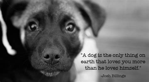 dog lover quotes  pinterest dog rules puppy