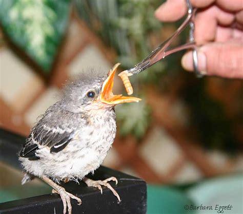 baby bird identification gallery