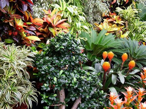 tropical flowering bushes tropical quotes like success