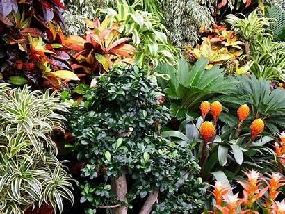 Tropical Plants Rentokil Shrubs Bushes Quotes Flower