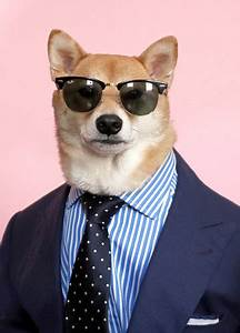 Doge In Suit