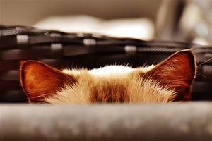A Guide To Cat And Kitten Hearing And Ear Care