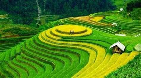 what is terrace farming where is it practiced quora