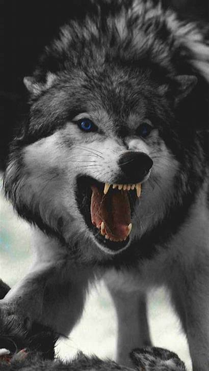 Wolf Angry Mad Wallpapers Zedge Animal Ringtones