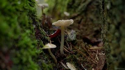 Mushroom Raining Mushrooms Forest Rain Drops Gifs