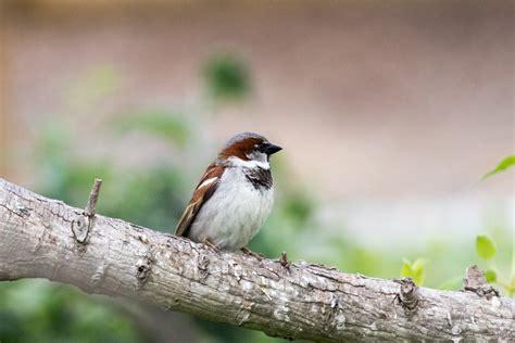 Identify Backyard Birds by Sfv Backyard Bird Identification San Fernando Valley