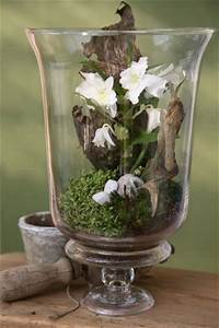 Minigarten Im Glas : die besten 25 orchideen im glas ideen auf pinterest topf orchidee mitteldekoration orchideen ~ Eleganceandgraceweddings.com Haus und Dekorationen