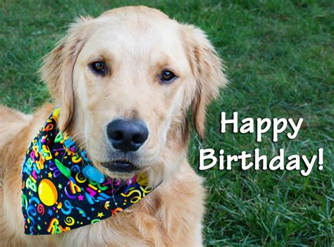Happy Birthday From Collarific Dog Bandanas Keep The