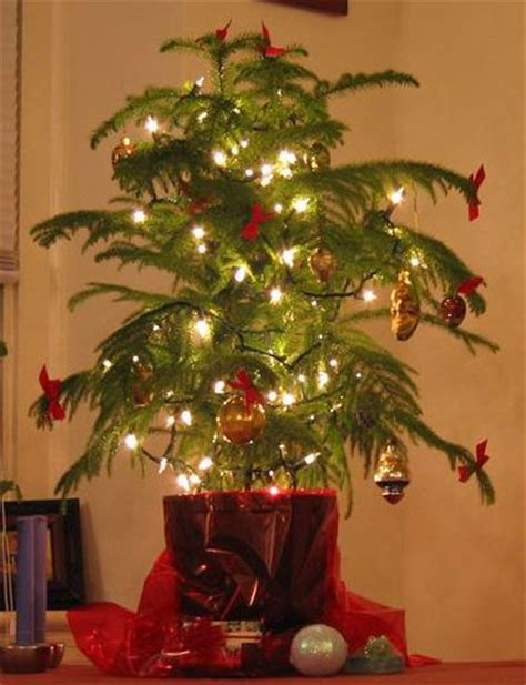 what to use instead of a christmas tree many are starting to use a living tree instead of a cut one the top choice for