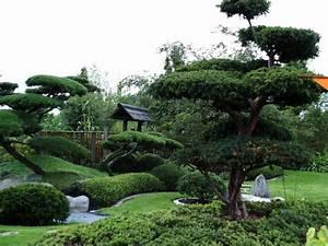bild 1 aus beitrag park der garten in bad zwischenahn With garten planen mit bonsai ficus