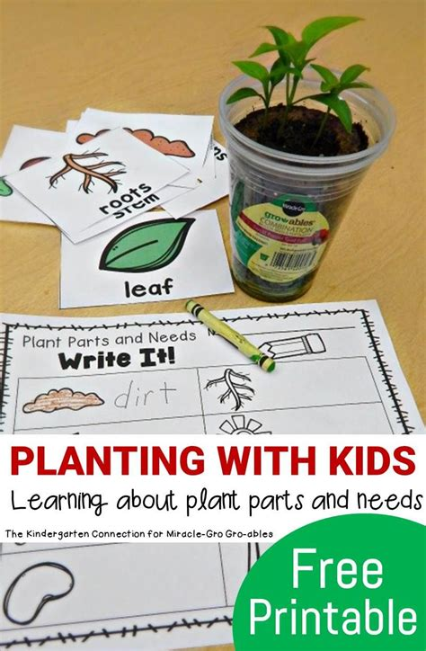 planting with plant parts and needs 943 | 42bf7c3e50565bfd566600681201bfd2