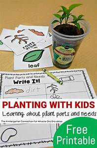 Planting With Kids - Plant Parts and Needs | Kids fun ...