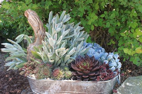 Garden Containers In Madison, Georgia Succulents