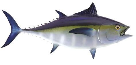 tuna fish tuna fish