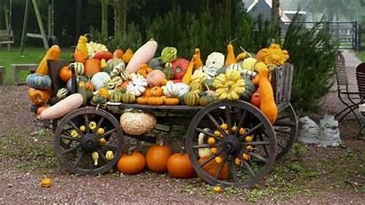 Fall Pumpkins Pumpkin Nature Harvest Background Backgrounds