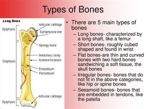 Broken Bones Powerpoint Presentation