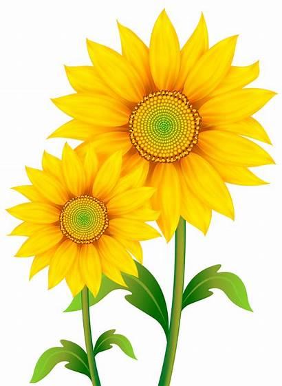 Transparent Clipart Sunflowers Flowers Yopriceville Previous