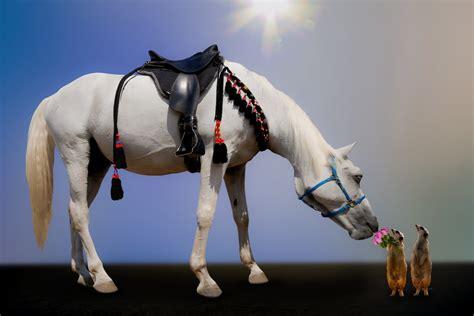 horses dreams dream horse means