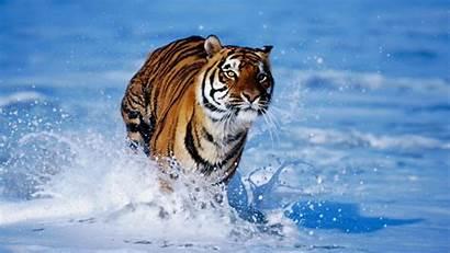 Wallpapers Wildlife Screensavers Screen Amazing Al