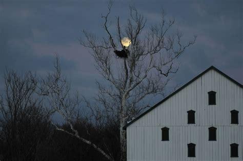 picture eagles nest night barn  house farm