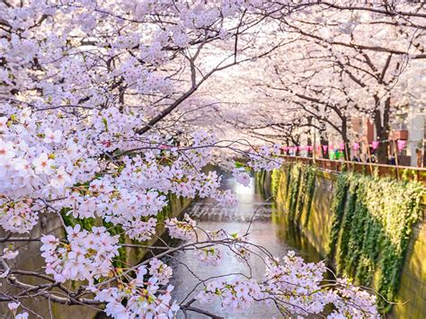Tokyo In Spring Best Things To See And Do  Lonely Planet