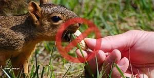 Que Donner A Manger A Un Ecureuil Sauvage : nourrir les animaux sauvages en ville mythes et r alit s ~ Dallasstarsshop.com Idées de Décoration