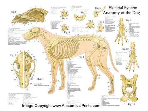 Plane Dog Anatomy Diagram