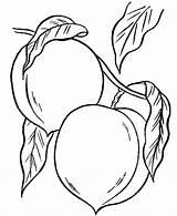 Coloring Peaches Colorear Para sketch template
