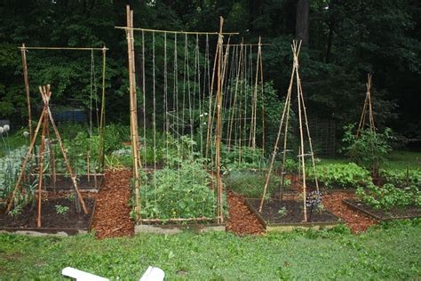 Outdoor Trellis by Bamboozling How To Build A Bamboo Trellis Let S