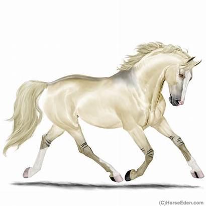 Horse Eden Eventing Horseeden Warmblood Mare Sep