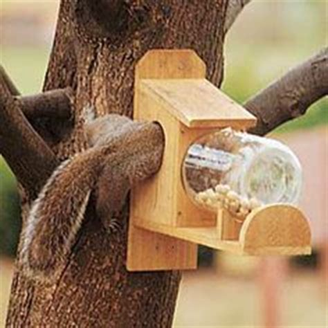 squirrel feeder chair plans 1000 images about squirrel y on squirrel