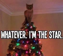 christmas tree star cat meme things that make me giggle pinterest christmas trees kitty