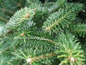 How To Properly Decorate A Christmas Tree by Fresh Christmas Trees And Greens Fruit Basket Flowerland