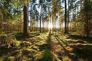 EU scientists s... Forest Floor Quotes