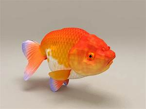 Red Ranchu Goldfish 3d Model 3ds Max Files Free Download