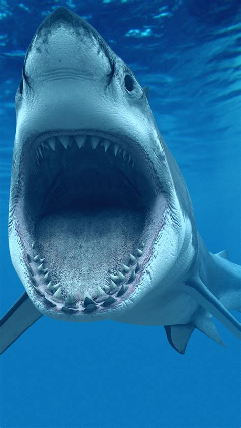 Animated Shark Wallpaper - tiger shark wallpaper 183