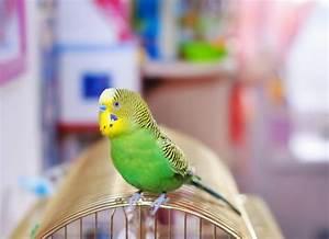 Bird Flu In Birds