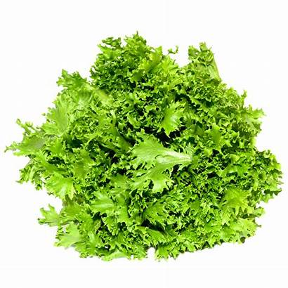 Lettuce Coral Lettuces Types Simplyfresh Fresh Head